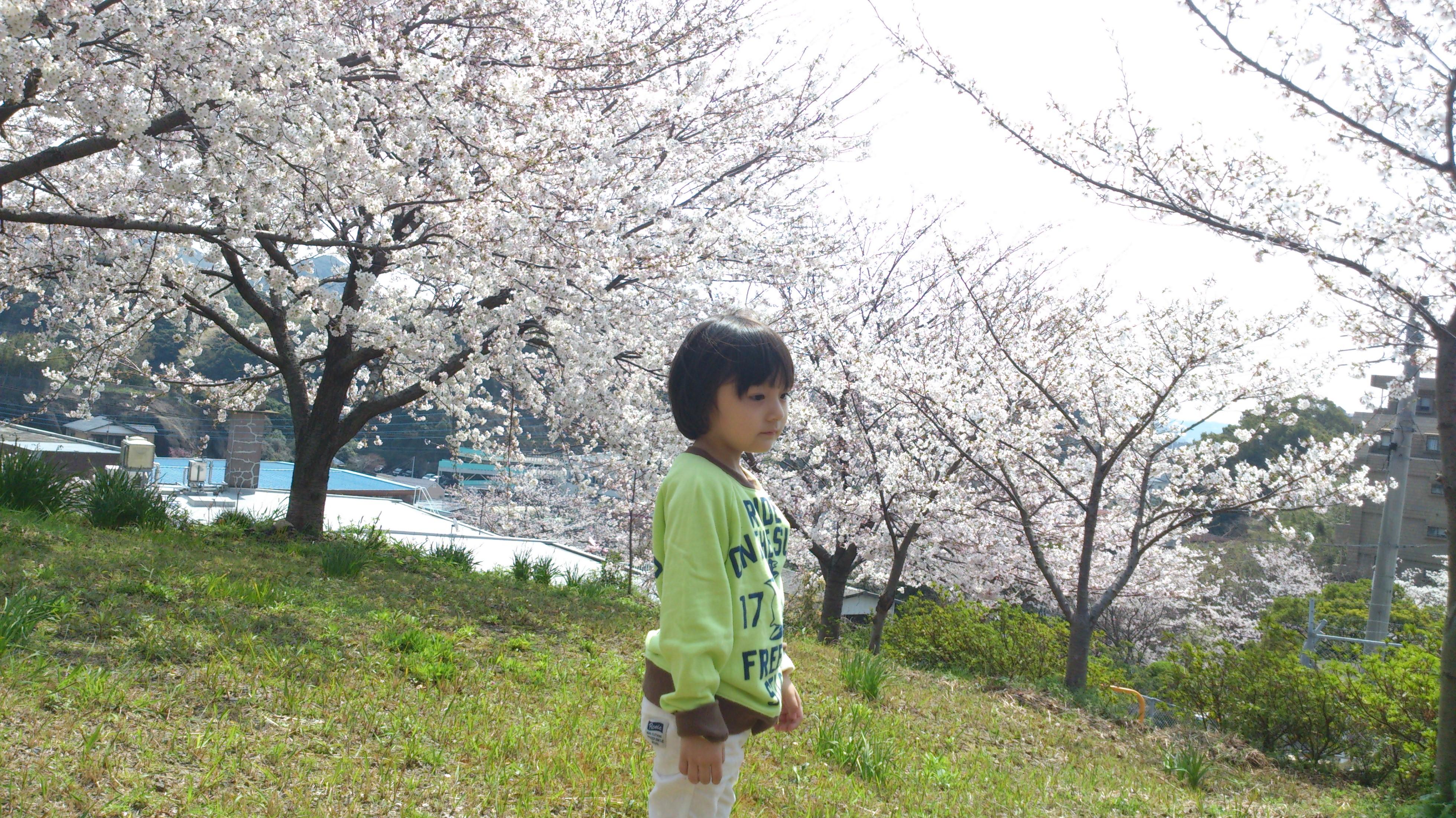 桜の名所「名切公園」